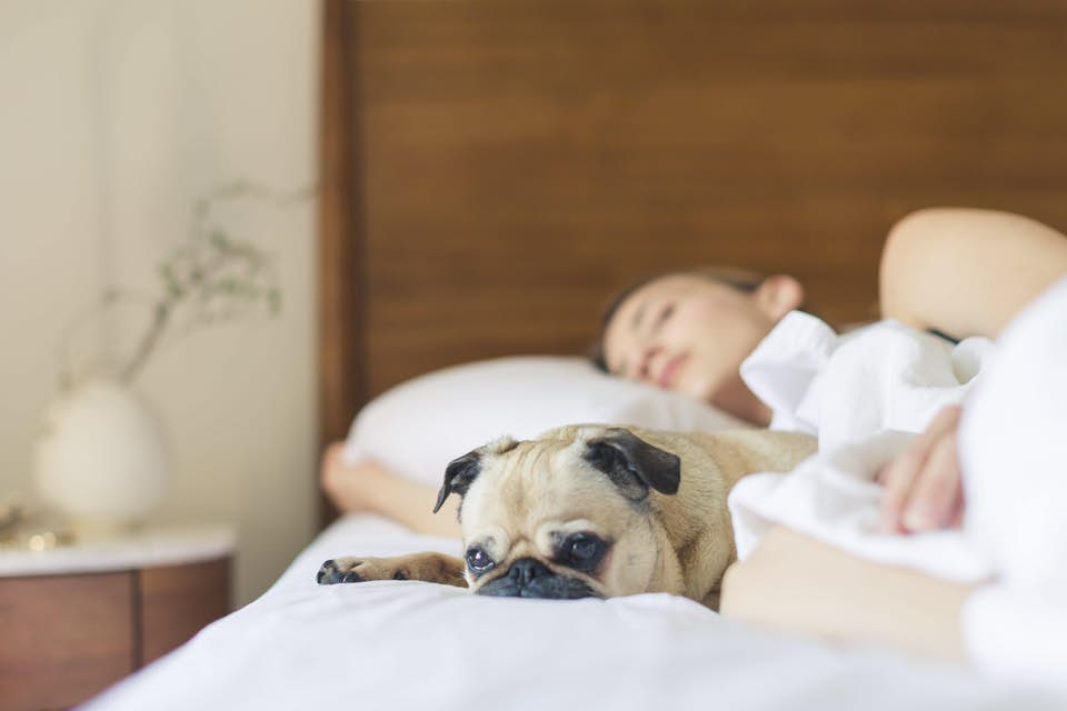 Woman sleeping soundly in bed with her pug as morning light brightens the room.